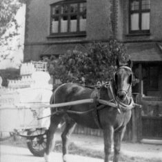 Jack the Milk Delivery Horse outside 85 Fairview Road c. 1953